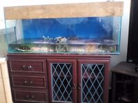 Full set up 4ft tank with cabinet. Comes with pump and heater