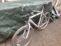 Mountain bike - adult - free to collect