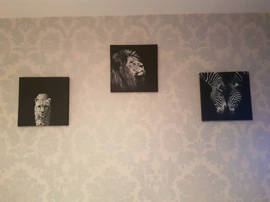 Lion, zebra & leopard canvas posters
