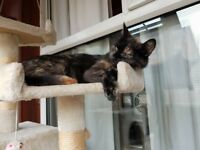 2 Lovely female cats in need of a good home