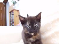 Female kitten - New Price
