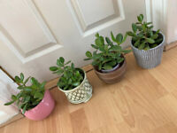 House Plants with Pots