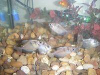 Tropical fish tank & Fish