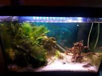 Fish Tank 70L