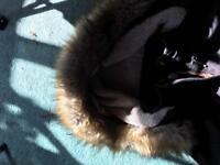 Puffa Coat ladies size 8