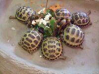 Stunning young tortoise