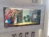 Stunning unique wall fish tank