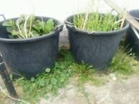 10 x 110L planting buckets with handles