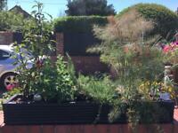 Herb Garden, Perennials gardens , Dahlias and plants