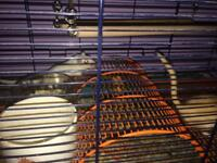 2 female. X-large cage and extras
