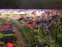 mix of 20 young tropical fish