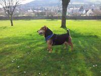 Dog Walker Bridge Of Earn Forgandenny and Abernethy Areas