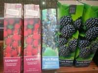5 fruit plants
