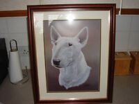 english bull terrier picture
