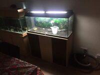 Large Juwel fish tank and stand