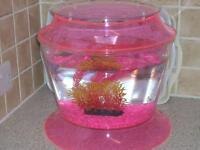 Lovely Pink /clear fish tank. complete with pump .