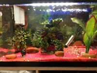 tropical fish tank +fish