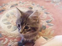 Kittens : 2 adorable baby cats available now to good homes