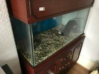 Fantastic large fish tank with filter air pump and plenty of storage space