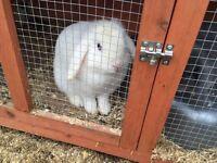Rabbits needing loving home