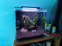 55 Litre Planted Aquarium with RGB Lights, Plant Care Tools and Fish Included