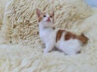 Last male kitten available