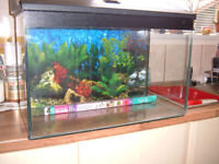 "Fish tank 2ft x 1ft x 15""tall with all pumps filters light,cover,plants-everything but the fish"