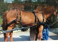 Horse driving harness