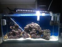 Marine fish tank with fish and coral