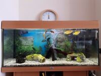 JUWEL 180 l fish tank, comes with all equipment needed to start an aquarium.