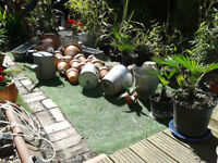 Pot, Palm, Planter & Plant Garden Clear-Out