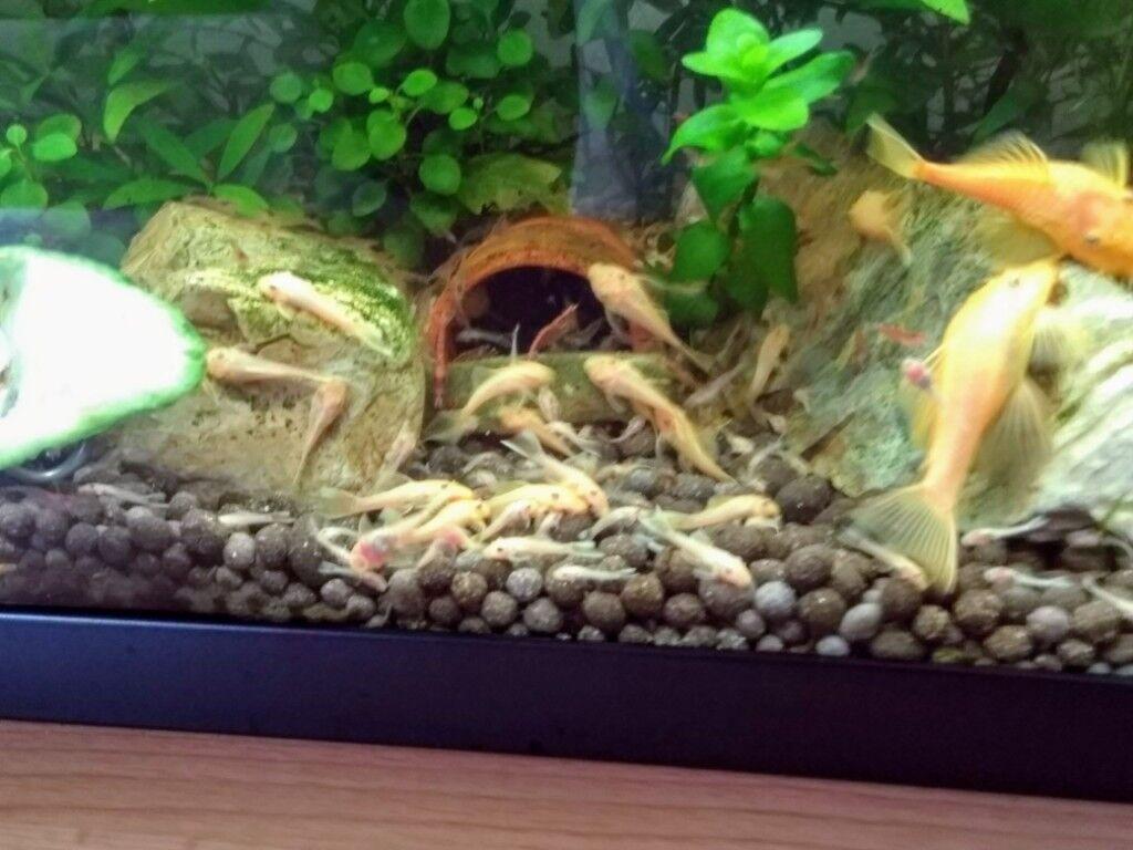 Bottom Feeding Fish For Aquarium - 1000+ Aquarium Ideas