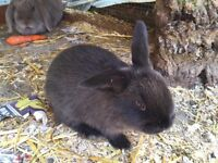 2x female rabbits