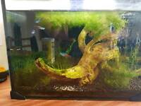 Planted fish tank with neon tetras and otocinclus