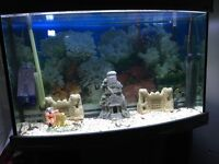 Bow front 1m fish tank with accessories free local delivery