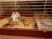 Indoor rabbit set up
