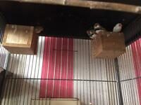 7 finches *need gone asap*