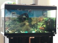 Free fish tank- Big aquarium