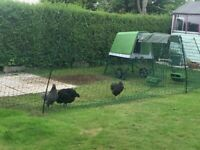 Chicken Netting Fence and other items