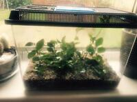 7 Indian stick insects with tank