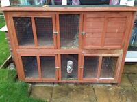 Pair of family friendly rabbits with large hutch