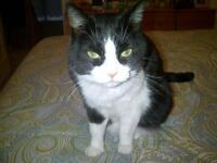 Cat Sitting Meadowvale, Streetsville & Areas