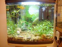 Interpet 48 litre Aquarium set up(NO FISH), heater, lights and filter!!