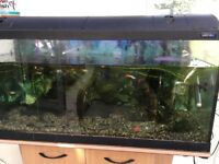 Tropical fish and equipment