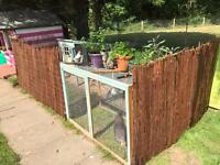 Chicken coup / run and 6 chickens