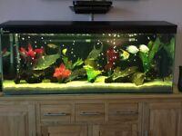 Aquarium complete set up
