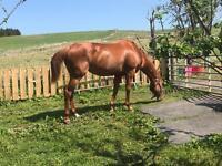 Horse rider/sharer - experienced rider - flexible days