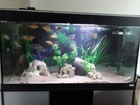 Aquarium and african cichlids for sale