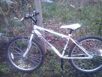 probike mountain bike for sale