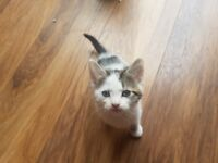 3 beautiful kittens looking for loving homed